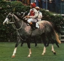 MING DYNASTY (Aus) Gr g 1973, Planet Kingdom - Chow Mein. Part-owned and trained by the legendary, Bart Cummings, he was one of my favourites. He won 17 races from 76 starts including the 1977 and 1980 Caulfield Cups, 1978 and 1980 VRC Australian Cups, 1978 AJC Queen Elizabeth Stakes and 1978 Metropolitan Handicap. An intelligent and honest horse, he became Clerk of the Course pony to Head Clerk at Randwick, Mick Stanley and fulfilled that roll for 20 years, passing away in May 2002.