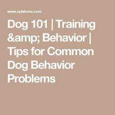 Dog 101   Training & Behavior   Tips for Common Dog Behavior Problems