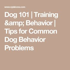 Dog 101 | Training & Behavior | Tips for Common Dog Behavior Problems