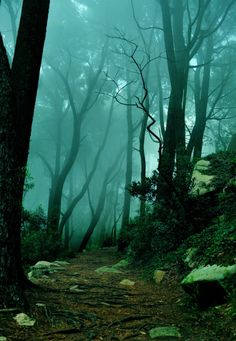 I really do hate the forest at night...just look at how scary it is.
