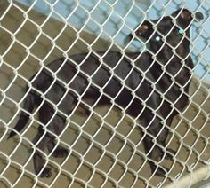 Meet JD a Petfinder adoptable Terrier Dog   Emporia, KS   Petfinder.com is the world�s largest database of adoptable pets and pet care information. Updated daily, search Petfinder for one of over 300,000 adoptable pets and thousands of pet-care articles!rescued