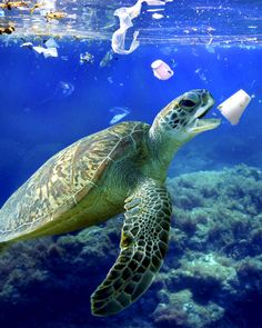 Environmental Pollution, Plastic Pollution, Beach Pollution, Pollution Environment, Environmental Posters, Save Planet Earth, Save Our Earth, Salve A Terra, Marine Biology