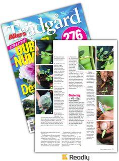 Tips om Allers Trädgård 17-07 sidan 77