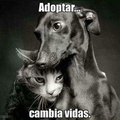 #Peludos #Perros #Mascotas #Mascottes #Pets #Mascot #Dogs #Shaggy #Furry #Hairy #Ilovedog #Dog #Gatos #Cats #gato #Ilovecats #Noalabandono #adoptanocompres