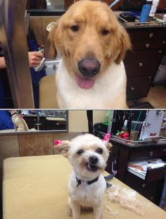 Check out and try Kimberlys K9 Cutz if you are searching for some of the efficient professional groomers in your area who provides professional pet grooming services. These people have several years of field experience.
