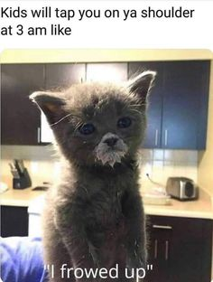 Roundup Of Incredibly Stupid Cat Memes And Pics - Memebase - Funny Memes Funny Baby Memes, Funny Babies, Cat Memes, Funny Kids, Mom Funny, Funny Humor, Funny Stuff, Funny Shit, Funny Things