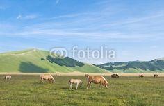 Cavalli in libertà - Free horses © Pietro D'Antonio