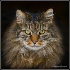 #BIG Cat  Like,Repin,Share, Thanks!