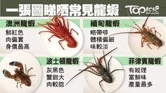 香港人喜歡食海鮮,龍蝦更是熱門之選。不同國家都有出產龍蝦,就香港而言,以下 4 個國家的龍蝦最常見:澳洲、緬甸、波士頓(