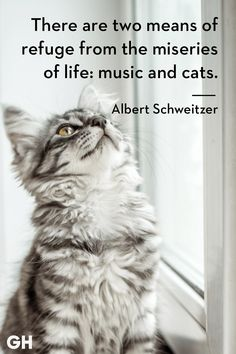 Catch Cat Quotes Sum Up Cats Purr-fectly - World's largest collection of cat memes and other animals Cute Kittens, Cats And Kittens, Orange Kittens, Funny Cat Videos, Funny Cats, Funny Jokes, Cool Cats, Cute Cat Quotes, Cat Qoutes