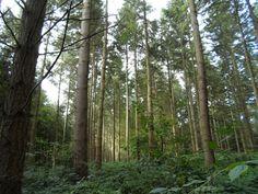 2013   Venez découvrir les forêts de l'Oise !   © Oise Tourisme Oise, 2013, Trunks, Plants, Tourism, Drift Wood, Tree Trunks, Plant, Planets