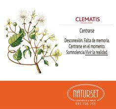 clematis Bach Flowers, Reiki, Flower Cards, Flower Power, Remedies, Healing, Herbs, Chromotherapy, Herbal Medicine