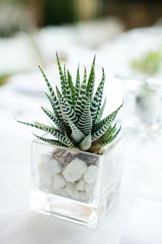 Zebra succulent as a pretty wedding centerpiece