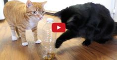 5 Great Hacks Fur Cat Owners
