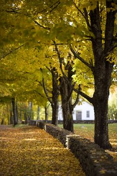 Nothing beats a beautiful stroll in the fall. #Vermont www.VermontCountryStore.com