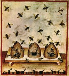 Bees & beehives from medieval Illuminated Manuscript.