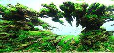 Mind-Blowing Aquariums Look Like Underwater Forests, Deserts, ...