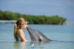 Una experiencia única, nadar con delfines en el Caribe!