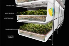 A new aeroponics 'farm' in New Jersey couple represent a breakthrough in agriculture. growing without soil World's largest vertical farm grows without soil, sunlight or water in Newark
