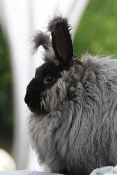 Fiber bunneh.  I have one named Juniper and she looks like a muppet.