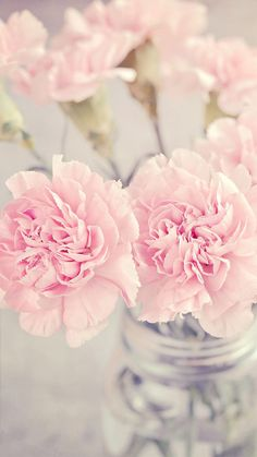 Pretty pink flowers, pastel, wallpaper, iPhone, background