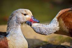 En imágenes: el amor en el Zoológico de #Cali | EL PAIS