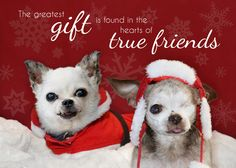 We are pleased to offer you our very special Holiday Cards for the upcoming season! There are 2 designs available and each is sold as a set of 6. The cost is only $8.50/set with fast, FREE SHIPPING…