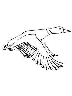 ducksdrawings | Flying Mallard Duck coloring page