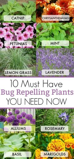 10 MUST HAVE BUG REPELLING PLANTS YOU NEED NOW IN YOUR BACKYARD TO KEEP THOSE BUGS AWAY #catsdiycave