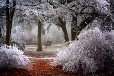 Trees In Thick Rime wallpapers