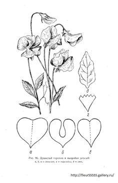 Gallery.ru / Фото #89 - 91 - Fleur55555 Metal Flowers, Diy Flowers, Paper Flowers, Cute Crafts, Felt Crafts, Cardboard Crafts, Paper Crafts, Floral Backdrop, Flower Template