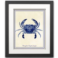 Blue Crab Art Print - Nautical Art Print - Crustacean Art - Nautical Decor - Beach Crab - SHIPPING INCLUDED - Secret Harbor Designs by SecretHarborDesigns on Etsy https://www.etsy.com/listing/153708611/blue-crab-art-print-nautical-art-print