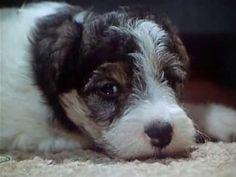 Dášeňka (TV seriál) - YouTube Youtube, Retro, Dogs, Animals, Animales, Animaux, Pet Dogs, Doggies, Animal