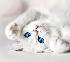 Image about girl in Cute Animals 💖 by Roxy on We Heart It Cute Kittens, Cute Little Kittens, Cute Baby Cats, Animals And Pets, Baby Animals, Funny Animals, Cute Animals, Pretty Cats, Beautiful Cats