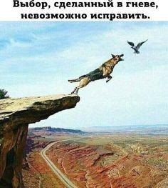 https://s-media-cache-ak0.pinimg.com/originals/72/8a/a8/728aa86af3244bd455ba0a4705dad13f.jpg