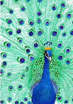 1000 ideas about peacock artwork on peacock Peacock Artwork, Peacock Images, Peacock Pictures, Peacock Painting, Ceramic Painting, Watercolor Peacock, Peacock Drawing, Watercolour Pens, Pretty Birds