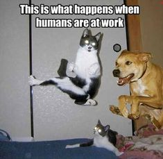 Attack Of The Funny Animals � 25 Pics