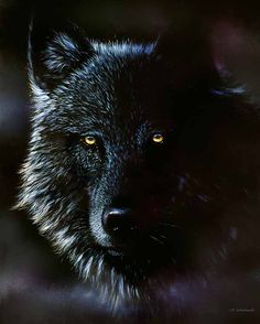 Black Wolf with Red Eyes | black wolf if you look close you can see littler red riding hood in ...