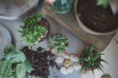 a daily something: Florals 07 // Succulents and Terrariums