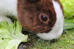 Kenya Info Hub: Rabbit Millionaires Project