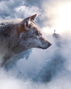 Rumore nella notte — sosuperawesome: Ebenism on. Wolf Photos, Wolf Pictures, Nature Pictures, Dark Fantasy Art, Fantasy Wolf, Image Lion, Bull Elephant, Giant Animals, Wolf Spirit Animal