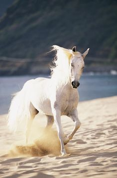 My favorite color horse. So beautiful. I want one and want to name it Shadowfax.