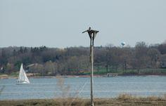 Osprey nest in Bayville. Nassau County #LONGISLANDCOASTLINE