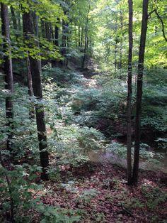 Moraine Nature Preserve, Indiana