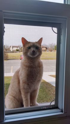 Neighborhood cat. He would only come by at night but now says hi in the morning.   cats funny pictures