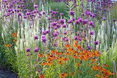 Garden Ideas, Border ideas, Perennial Planting, Perennial combination, Sneezeweed Waltraut, Helenium Waltraut, Monarda, Bee Balm, Culver's Root, Veronicastrum Virginicum, Late summer perennial