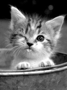 #animaux #mignon …