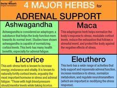 Adrenal fatigue can happen due to an illness, high stress job as well as a… Adrenal Fatigue Treatment, Adrenal Fatigue Symptoms, Adrenal Glands, Chronic Fatigue Syndrome, High Cortisol Symptoms, Adrenal Stress, Thyroid Gland, High Stress Jobs, Adrenal Health
