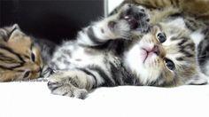More GIFs: http://catsdogsblog.tumblr.com