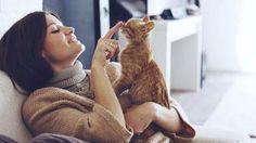 Co je dobré vědět, než si pořídíte kotě